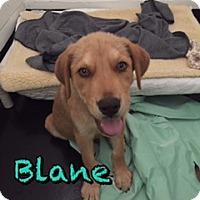 Adopt A Pet :: Blane - Barnwell, SC
