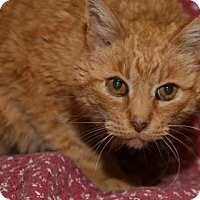 Adopt A Pet :: Prince Charming - Rapid City, SD