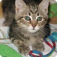 Adopt A Pet :: Maxwell - Bedford, VA