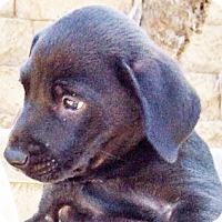 Adopt A Pet :: Lily - Poway, CA