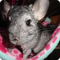 Adopt A Pet :: Piper - Titusville, FL