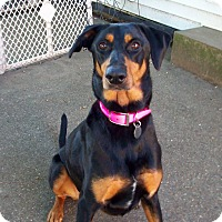 Adopt A Pet :: Bailey - New Richmond, OH