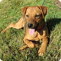 Adopt A Pet :: Brisky - Glastonbury, CT