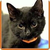 Adopt A Pet :: Berries - Sullivan, IN