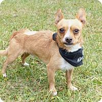 Adopt A Pet :: Rags - Mocksville, NC