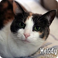 Calico Cat for adoption in Merrifield, Virginia - Melody