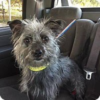 Adopt A Pet :: Skunk - Redondo Beach, CA