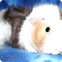 Adopt A Pet :: Raiden - Steger, IL