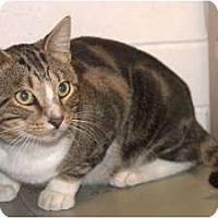 Adopt A Pet :: Sammie - New Port Richey, FL
