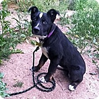 Adopt A Pet :: Triton - Tempe, AZ
