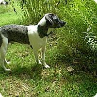 Adopt A Pet :: Rufus - Richmond, VA