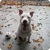 Adopt A Pet :: Casper - Southbury, CT