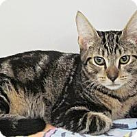 Adopt A Pet :: Tarzan - Seminole, FL