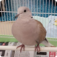 Adopt A Pet :: Cooper - Neenah, WI