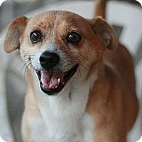 Adopt A Pet :: Pumpkin - Canoga Park, CA