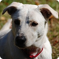 Adopt A Pet :: Sera - PENDING, in Maine - kennebunkport, ME