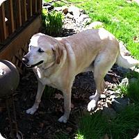 Adopt A Pet :: Freddy - Wilmington, DE