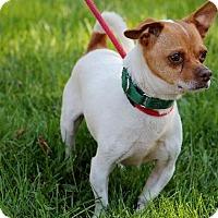Adopt A Pet :: Coco - Williston, VT