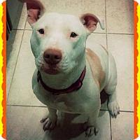 Adopt A Pet :: Savannah - Yuba City, CA