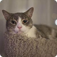 Adopt A Pet :: Indy - Toronto, ON