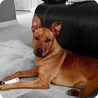Adopt A Pet :: Melrose - Dayton, OH