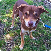 Adopt A Pet :: Rascal - Mission Viejo, CA