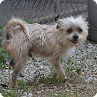 Adopt A Pet :: Chase - Clermont, FL