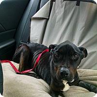 Adopt A Pet :: Holmes - Garden City, MI