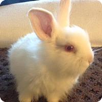Adopt A Pet :: Landis baby - Bonita, CA