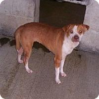 Adopt A Pet :: Penelope - Aurora, IL