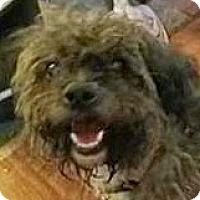 Adopt A Pet :: Jewel-Adoption Pending - Boulder, CO