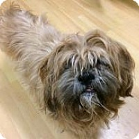 Adopt A Pet :: Stanley in Ct - Manchester, CT