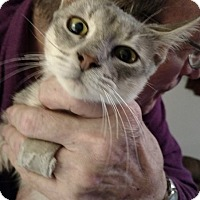 Adopt A Pet :: Harbor - Toledo, OH