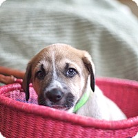 Adopt A Pet :: Crpgotram - Evergreen, CO