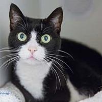 Adopt A Pet :: Shauna - Merrifield, VA