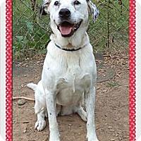Adopt A Pet :: Patti - Tampa, FL
