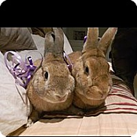 Adopt A Pet :: Harold and Willow - Conshohocken, PA