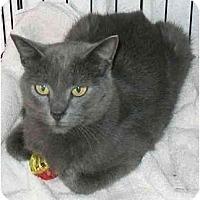 Adopt A Pet :: Wanda - Plainville, MA