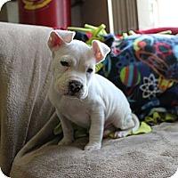 Adopt A Pet :: Pez - Loxahatchee, FL