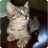 Adopt A Pet :: Buttercup aka Bushy - Modesto, CA