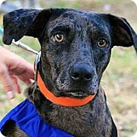 Adopt A Pet :: Maddy - Tallahassee, FL