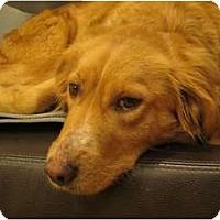 Adopt A Pet :: Meg - Denver, CO