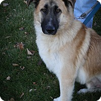 Adopt A Pet :: Quinn - Broomfield, CO