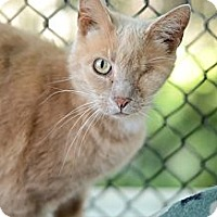 Adopt A Pet :: Maria - New Freedom, PA