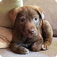 Adopt A Pet :: Carmella - Homewood, AL
