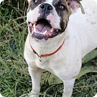 Adopt A Pet :: Oliver - Starkville, MS