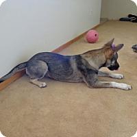 Adopt A Pet :: Leia - Only $65 adoption fee! - Litchfield Park, AZ