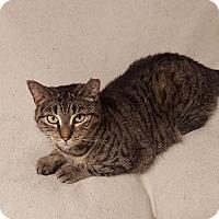 Adopt A Pet :: Lily - Berkeley Hts, NJ