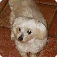 Adopt A Pet :: Casper - Cotati, CA
