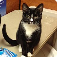 Adopt A Pet :: Penske - Morganton, NC